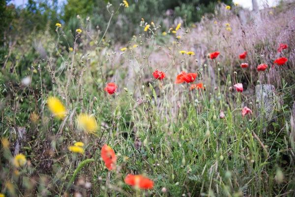 踏まれても折れない野の花のほうがはるかに強い生命力を感じます